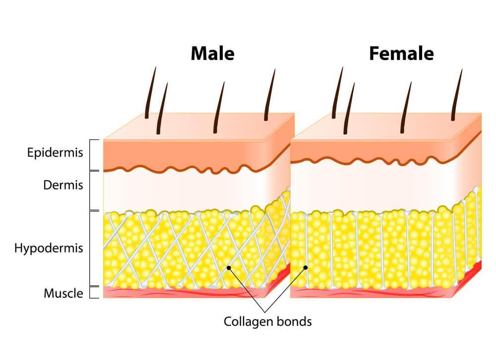 Infographic on male versus female skin